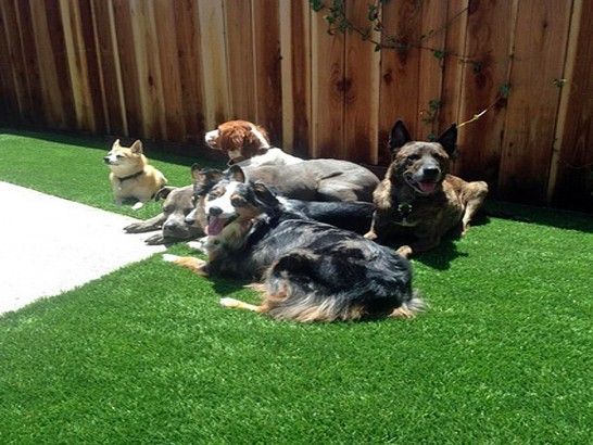 Artificial Grass Photos: Fake Pets Areas Carver Massachusetts Installation