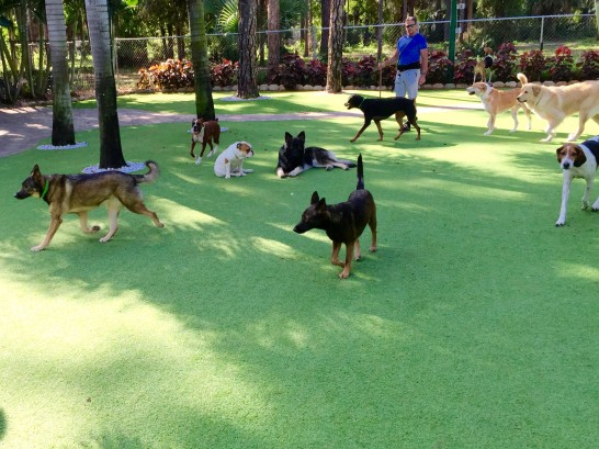 Artificial Grass Photos: Plastic Grass Webster, Massachusetts Dog Grass,  Dog Kennels