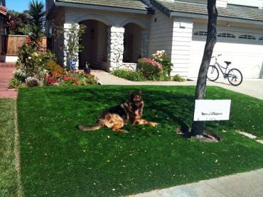 Artificial Grass Photos: Synthetic Pet Turf Belmont Massachusetts for Dogs