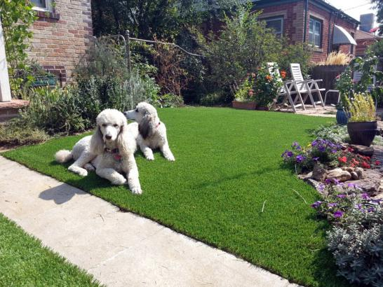 Artificial Grass Photos: Synthetic Pet Turf Hudson Massachusetts for Dogs